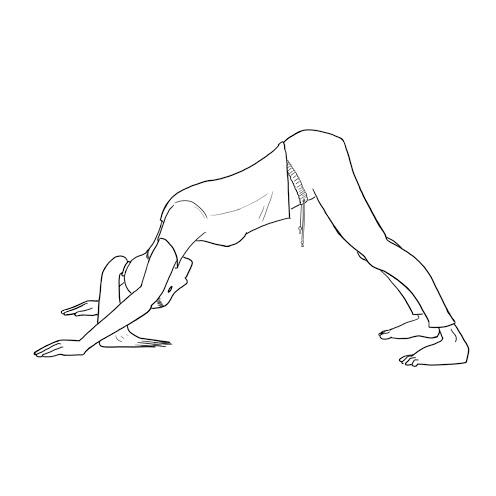yogaDownDog